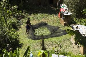 Koka Ernte in Bolivien