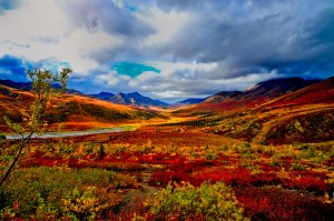 Yukon Indian Summer