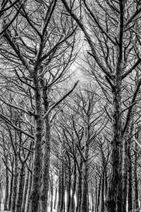 Italy Tuscany black&white trees
