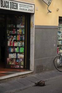 Italy Tuscany Florence Head off