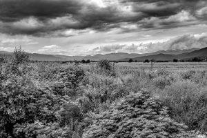 Fern Landscape Georgia 2016 02 GPS 42°0'1- N 45°39'34- E