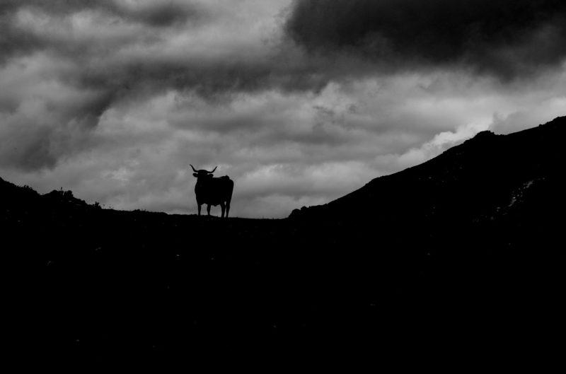 Asturias Spain Toro